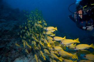 2010_Maldiven (153)