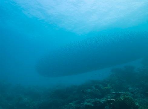 2010_Maldiven (280)