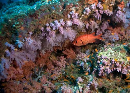 2010_Maldiven (310)