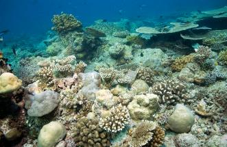 2010_Maldiven (407)