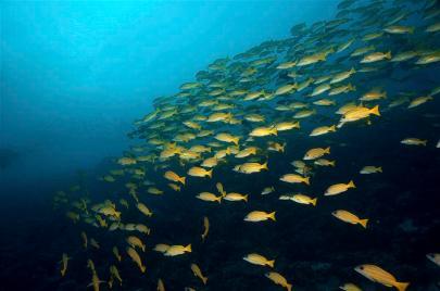 2010_Maldiven (437)