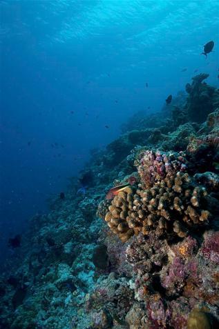 2010_Maldiven (512)