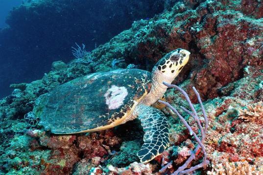 2010_Maldiven (57)
